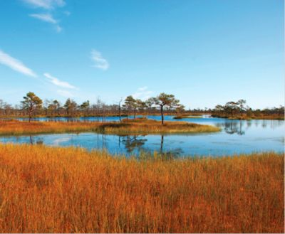 Yelnia – one of Belarus' most beautiful and least disturbed bogs (photo: Annett Thiele).